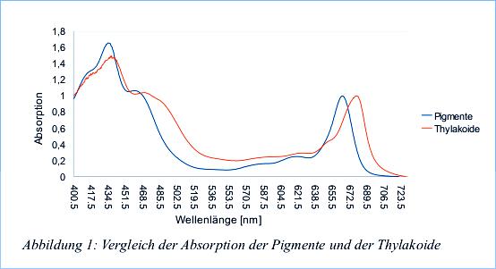 absorptionsspektrum der chlorophylle essay Da die chlorophylle in der pigmentlösung nicht mehr durch proteine und thylakoide positioniert das absorptionsspektrum der hergestellten pigmentlösung und.